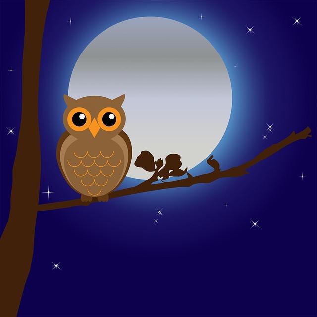 owl-163574_640.jpg