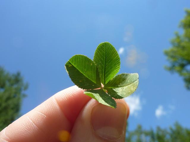 four-leaf-clover-19776_640.jpg