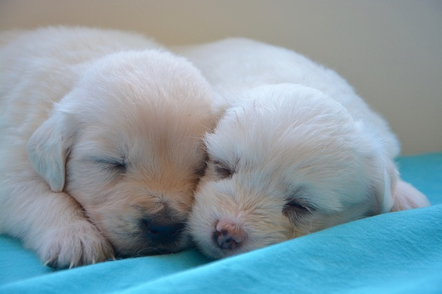 puppies-2646019_640.jpg