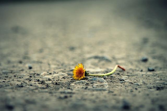 flower-1812470_640.jpg