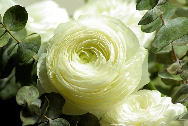 flowers-728811_640.jpg